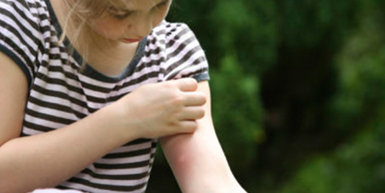 Muggenplaag op komst